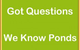 Pond Questions? We can help!