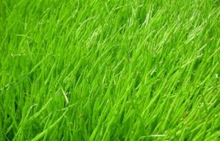 Bog Plants: Micro Sword