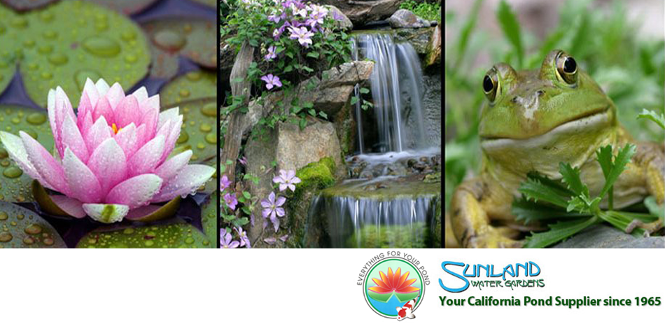 Pond Supplies: Your source for Aquatic plants, Aquaponic supplies, Water Lilies/Lotus, Koi and Critters, Organic Supplies and all types of Bog Plants.