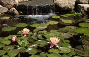 Custom pond: koi pond