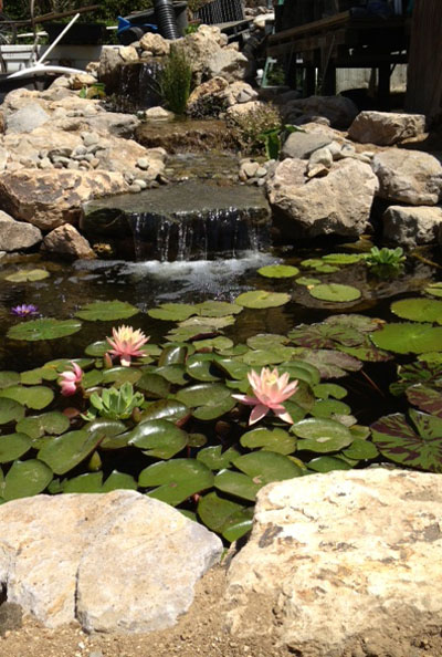 custom pond, custom pond design, natural rock pond