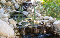 Pond display: Rock pond