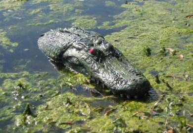 Pond & Garden Protection: Floating Gator - Pond Maintenance