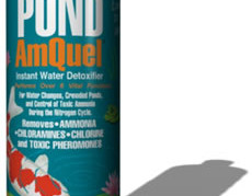 Pond Maintenance: Kordon Amquel   Pond Water Care