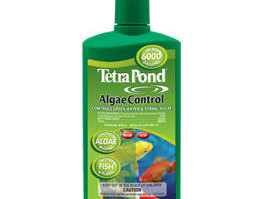 Pond Maintenance: Tetra Algae Control | Pond Water Care