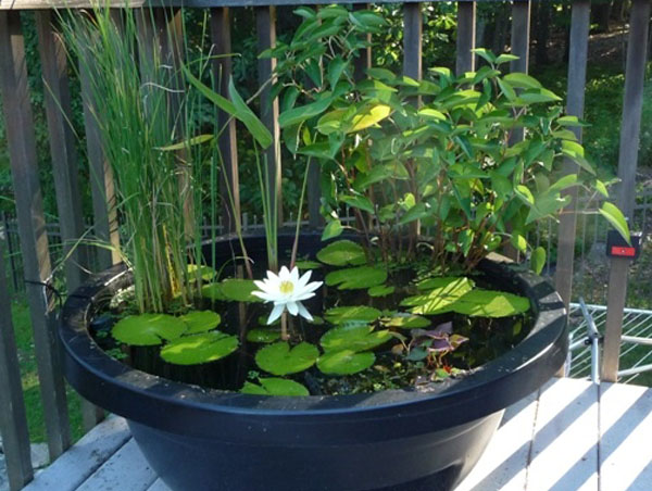 small container water garden small ponds - Water Garden Plants
