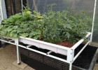 What do I need for my own Aquaponic system?