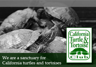 Sanctuary for Turtles and Tortoises – California Turtle and Tortoise Club