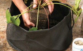 Aquascape Fabric Lily Pot 14