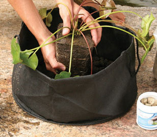"Aquascape Fabric Lily Pot 14"" Round x 7"" Deep (2 Pack) - Planting Containers - Pond Plant Care - Part Number: 98929 - Aquascape Pond Supplies"