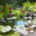 What to do to get your pond ready for spring?