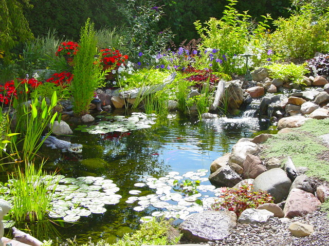 How to get rid of algae in your pond