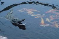 Aquascape Pond Supplies: Floating Alligator Decoy |  </div>   <a href=