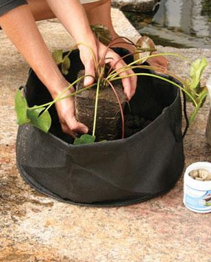 Aquascape Pond Supplies: Fabric Lily Pot 14